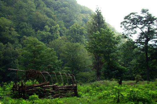پارک جنگلی سیسنگان تنها ذخیره گاه منحصر به فرد شمشاد