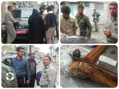 دستگیری متخلفین شکار در ساری