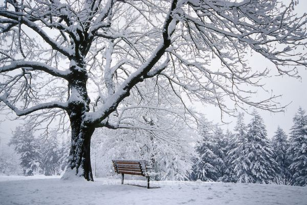بارش برف در ساری آغاز شد
